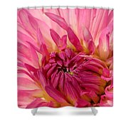 Dahlia 2am-104251 Shower Curtain