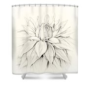 Dahlia 3 Shower Curtain