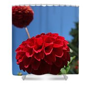 Dahlia #4 Shower Curtain