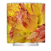 Dahlia - 812 Shower Curtain