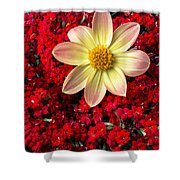 Dahlia And Kalanchoe Shower Curtain
