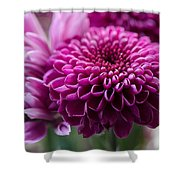Dahlia And Mums Shower Curtain
