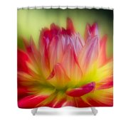 Dahlia Color Explosion Shower Curtain