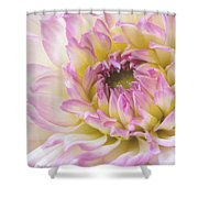 Dahlia Delight Square  Shower Curtain