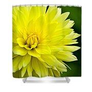 Dahlia Dream Shower Curtain