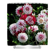 Dahlia Love Shower Curtain