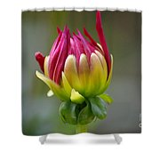 Dahlia Flower Bud Shower Curtain