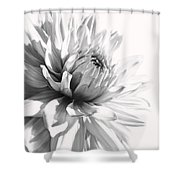 Dahlia Flower In Monochrome Shower Curtain
