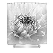 Dahlia Flower Soft Monochrome Shower Curtain