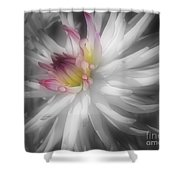 Dahlia Flower Splendor Shower Curtain