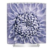 Dahlia Flower Star Burst Purple Shower Curtain