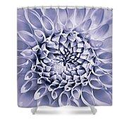 Dahlia Flower Star Burst Purple Shower Curtain
