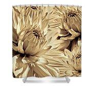Dahlia Flowers Bouquet Sepia Shower Curtain