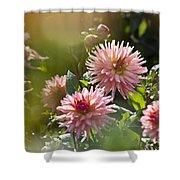 Dahlia Garden Shower Curtain