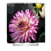 Dahlia Generations Shower Curtain