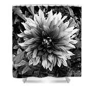 Dahlia In Black And White Shower Curtain