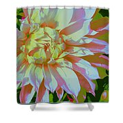 Dahlia In Pink And White Shower Curtain