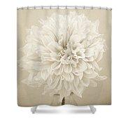 Dahlia In Sepia Shower Curtain