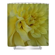 Dahlia Macro Shower Curtain