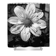 Dahlia Named Alpen Cherub Shower Curtain