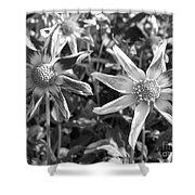 Dahlia Named Amy's Star Shower Curtain