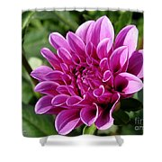 Dahlia Named Blue Bell Shower Curtain