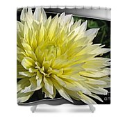 Dahlia Named Canary Fubuki Shower Curtain
