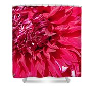 Dahlia Named Mingus Erik Shower Curtain