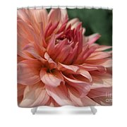 Dahlia Named Preference Shower Curtain