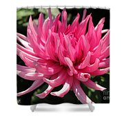 Dahlia Named Pretty In Pink Shower Curtain