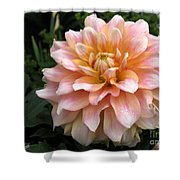 Dahlia Named Seattle Shower Curtain