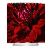 Dahlia Red Shower Curtain
