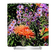 Dahlias And Asters Shower Curtain