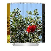 Daily Cycle - Triptych Shower Curtain