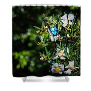 Daintree Monarch Butterfly Shower Curtain