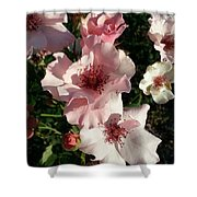 Dainty Roses 2 Shower Curtain