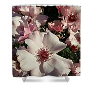 Dainty Roses Shower Curtain