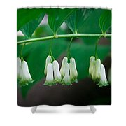 Dainty White Flowers Central Park Shower Curtain