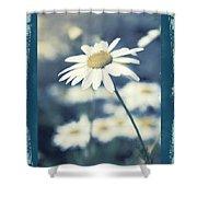 Daisies ... Again - 146a Shower Curtain