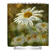 Daisies ... Again - P11at01 Shower Curtain