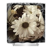 Daisies And Charcoal Shower Curtain