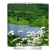 White Daisies At Queens View Shower Curtain
