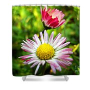 Daisies In Januray Shower Curtain