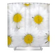 Daisies On A White Background Shower Curtain