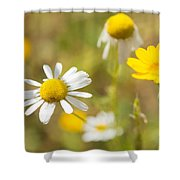 Daisies On Summer Meadow Shower Curtain