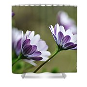 Daisies Seeking The Sunlight Shower Curtain