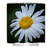 Daisy 14-3 Shower Curtain