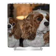 Daisy And Rivers Shower Curtain