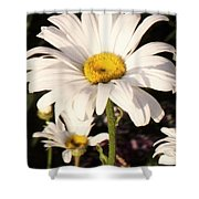 Daisy Close Up Shower Curtain