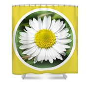 Daisy Closeup Shower Curtain